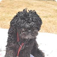 Adopt A Pet :: Delila - Tumwater, WA