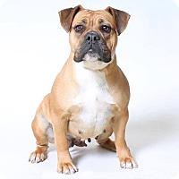Adopt A Pet :: Paisley - Hesperia, CA