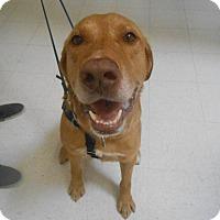 Adopt A Pet :: Cooper - Lockhart, TX