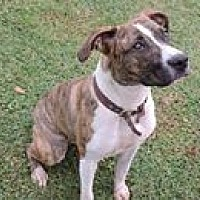 Adopt A Pet :: Cinnamon - Cottonport, LA