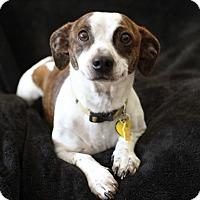 Adopt A Pet :: Kevin - Yorba Linda, CA
