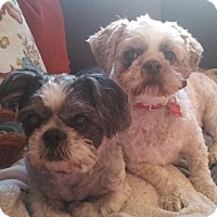 Adopt A Pet :: Lexi - Battle Ground, WA