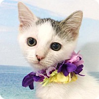 Adopt A Pet :: Dobby - Harrisonburg, VA