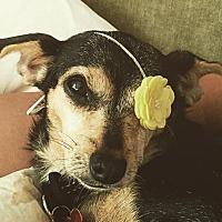 Adopt A Pet :: Mama Ella - Rancho Santa Fe, CA