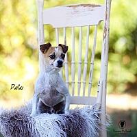 Adopt A Pet :: Dallas - Lubbock, TX