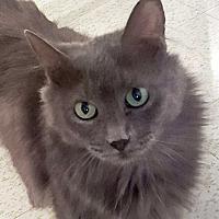 Adopt A Pet :: Darlow - McPherson, KS