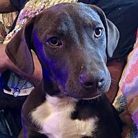 Adopt A Pet :: Winnie - ST LOUIS, MO