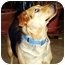 Photo 1 - German Shepherd Dog Mix Dog for adoption in Avon, New York - Cheyenne