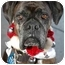 Photo 1 - Boxer Dog for adoption in Vista, California - Bruno