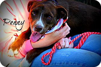 Border Collie Mix Puppy for adoption in Groton, Massachusetts - Penny