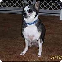 Adopt A Pet :: Cloe - Chandler, IN