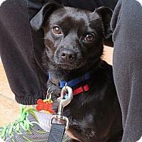 Adopt A Pet :: Harley - Scottsdale, AZ