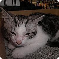 Adopt A Pet :: Xavier - Warren, MI