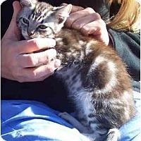 Adopt A Pet :: Petey - Davis, CA