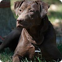 Adopt A Pet :: Gracie - Lewisville, IN