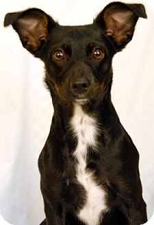 Feist/Terrier (Unknown Type, Medium) Mix Dog for adoption in Newland, North Carolina - Zoey