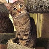 Adopt A Pet :: Timmy - Chino Hills, CA