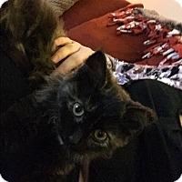 Adopt A Pet :: Aristocat - Covington, KY