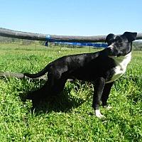 Adopt A Pet :: Jango - Vacaville, CA
