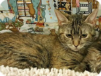 Domestic Shorthair Cat for adoption in Palmdale, California - Savannah