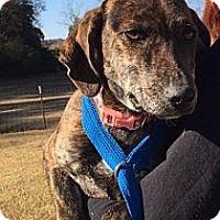 Adopt A Pet :: Iye - In Rhode Island! - Brattleboro, VT