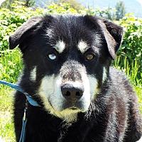 Adopt A Pet :: Jackson - Grants Pass, OR