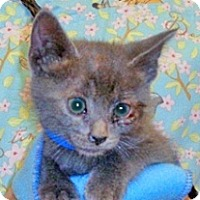 Adopt A Pet :: Freeway - Wildomar, CA
