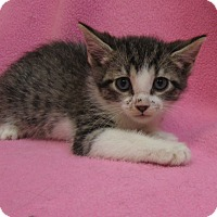 Adopt A Pet :: Gidget - Redwood Falls, MN