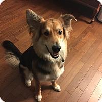 Adopt A Pet :: Porter - Cambridge, ON