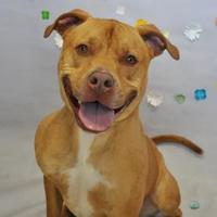 Adopt A Pet :: Prince - Wantagh, NY