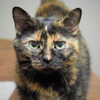Adopt A Pet :: Chanelle - Negaunee, MI