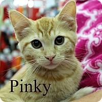 Adopt A Pet :: Pinky - Wichita Falls, TX