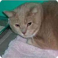 Adopt A Pet :: Jesse James - Secaucus, NJ