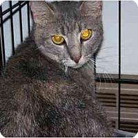 Adopt A Pet :: Ester - Syracuse, NY