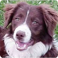Adopt A Pet :: Belmont Red--ADOPTED!!! - Tiffin, OH