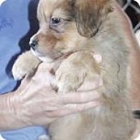 Adopt A Pet :: KENDRICK WILDER - Southampton, PA