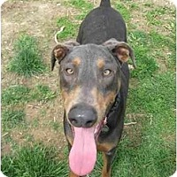 Adopt A Pet :: Rocky (blue)--adopted! - New Richmond, OH