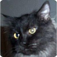 Adopt A Pet :: Albert - Andover, KS