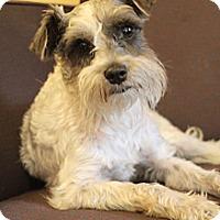 Adopt A Pet :: Gunner - Wytheville, VA