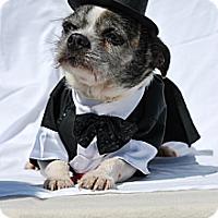 Adopt A Pet :: Usher - Harrodsburg, KY