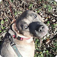 Adopt A Pet :: Baby Girl - Wappingers Falls, NY
