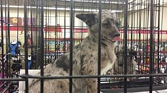 Terrier (Unknown Type, Medium) Dog for adoption in Fresno, California - Deer