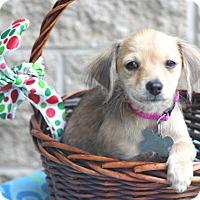 Adopt A Pet :: Swindon - Norwalk, CT