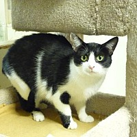 Adopt A Pet :: Momma Friskie - Westville, IN
