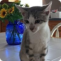 Adopt A Pet :: Grayson - Warrenton, MO