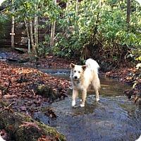 Adopt A Pet :: Niko - Bristol, VA
