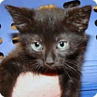 Adopt A Pet :: King - Wildomar, CA