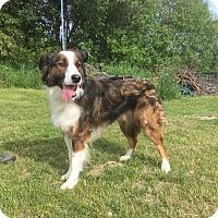 Adopt A Pet :: Luke - Minneapolis, MN