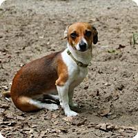 Adopt A Pet :: Twister - Muskegon, MI