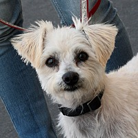 Adopt A Pet :: Harley - Palmdale, CA